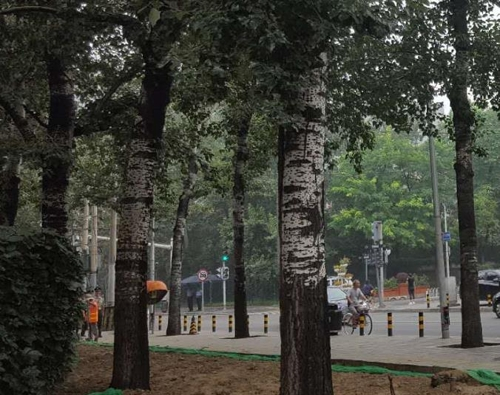 주중 북한대사관 앞에 배치된 중국 경찰들 <사진=연합뉴스>