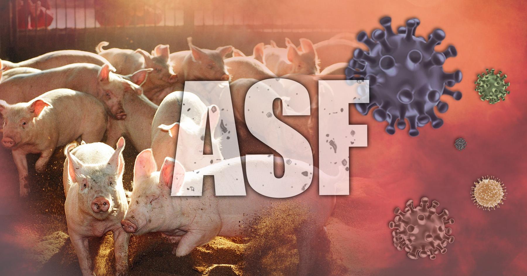 아프리카돼지열병