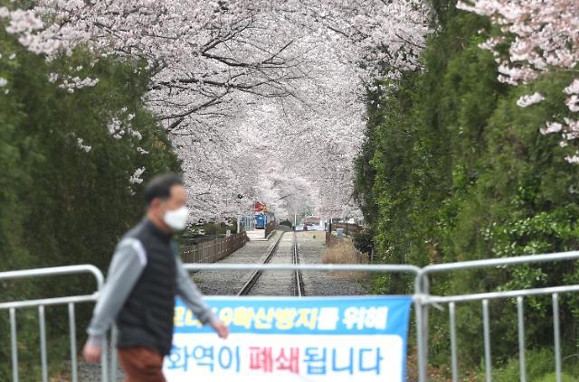 벚꽃길 폐쇄