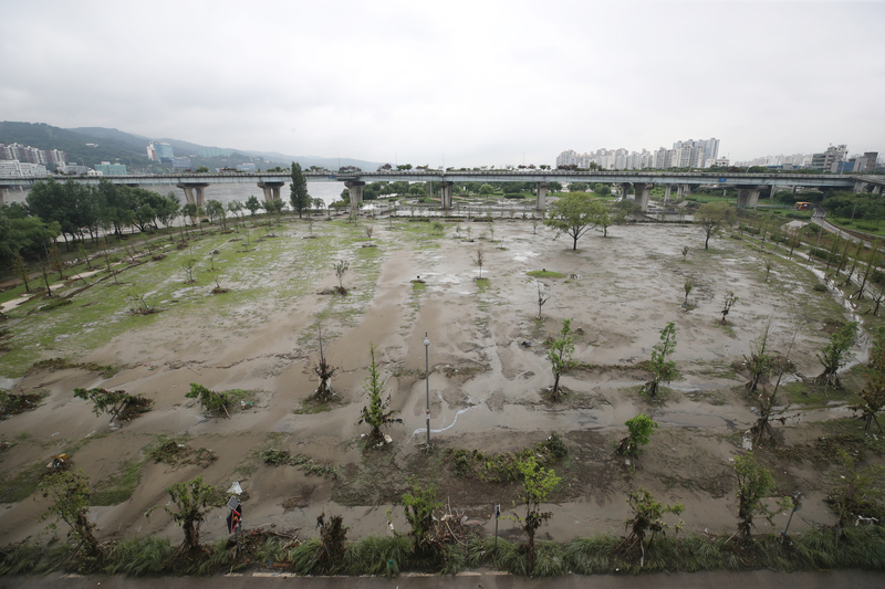 Flood waters recede during a lull in rain, leaving behind mud and rows of ravaged trees at Gwangnaru Hangang Park in Seoul.