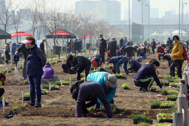 People plant vegetables in their gardens at an urban farm experience center in Seoul's Dongdaemun District.