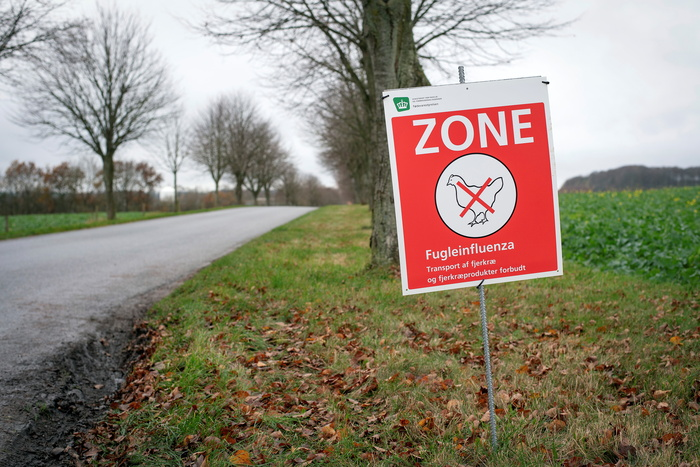 A sign warns about the avian influenza in an area of Randers, Denmark, on Nov. 17, 2020, where severe bird flu has been found in a chicken herd. (Photo: Reuters-Yonhap News)